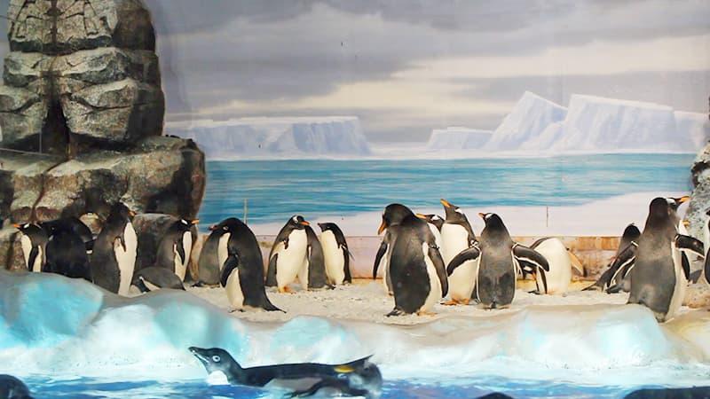 ペンギンイメージ